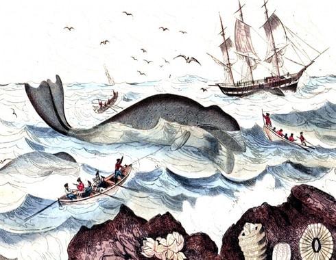 pesca de la ballena